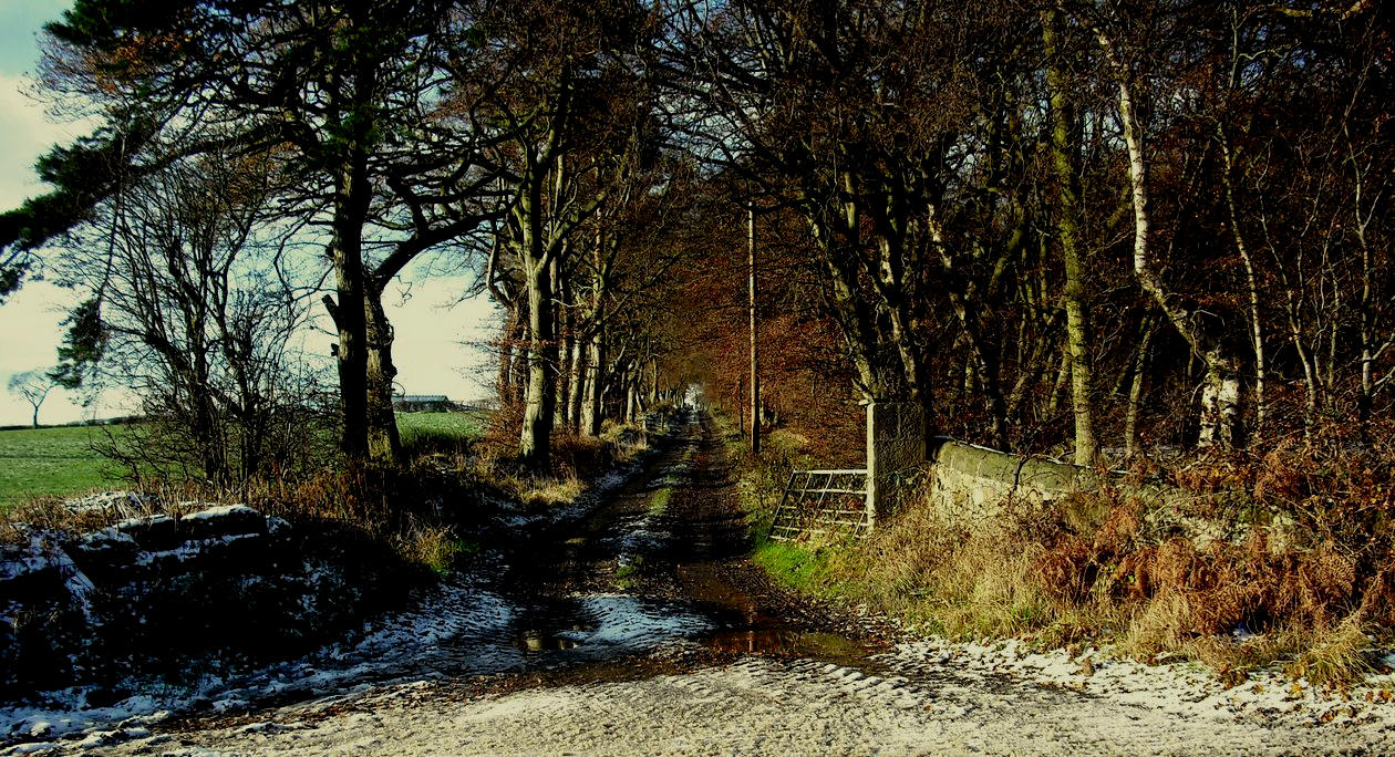 Fall - lane-near-craigluscar-fife