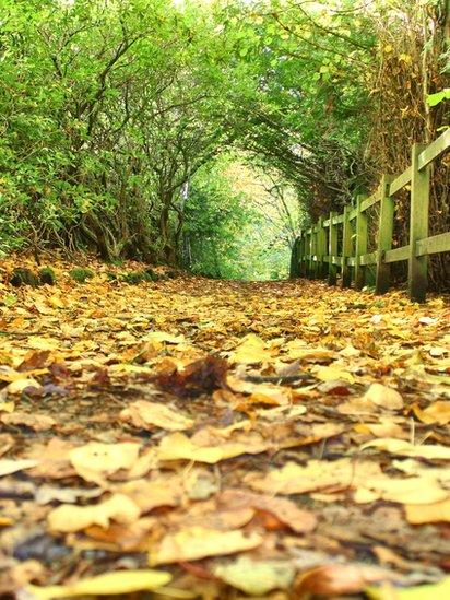 Fall - Rouken Glen Park