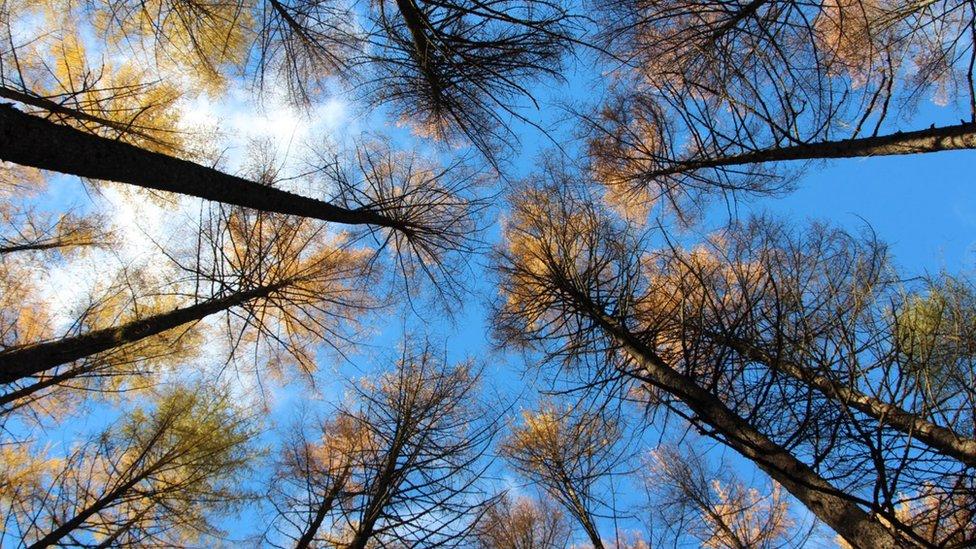 Fall - Wood near Strathyre