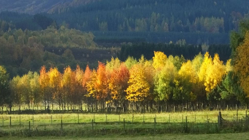Fall - Newtonmore