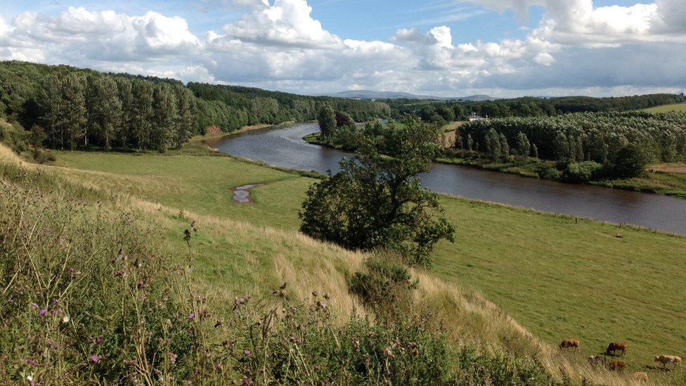 Summer - River Tweed near St Boswell