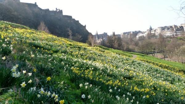 Spring - Castle Hill Edinburgh - Copy