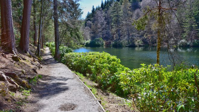 Spring - Fascally forest. Pitlochry