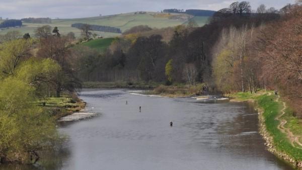 Spring - River Tweed