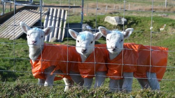 Spring - Triplets