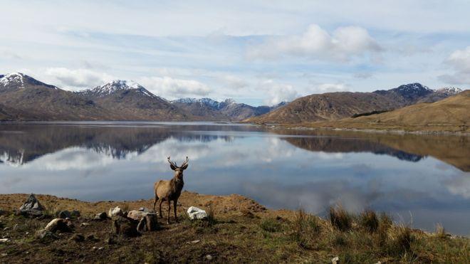 Spring - Loch Quoich