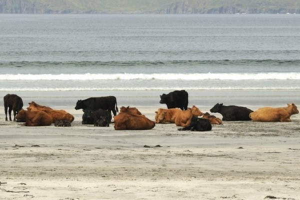Isle of Eigg (is this steak and eggs!)