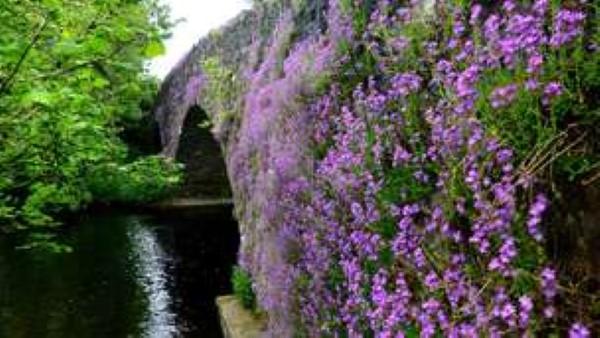 Summer - Gartchonzie Bridge