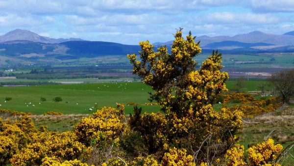 summer-kippen-view-to-carse-of-stirling