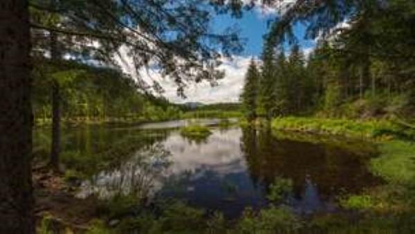summer-loch-gleannain-aberfoyle